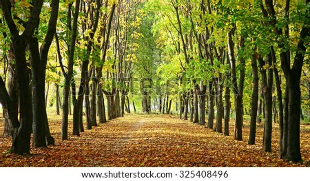 Alley in a park with colorful trees and sunlight #325408496