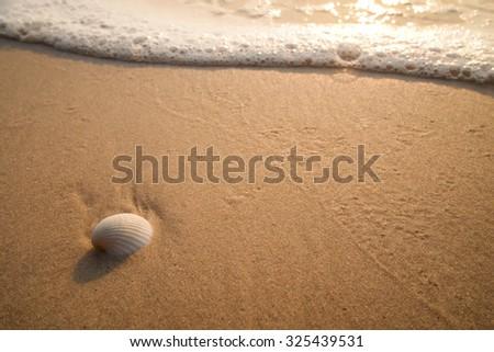 The shell on the beach #325439531