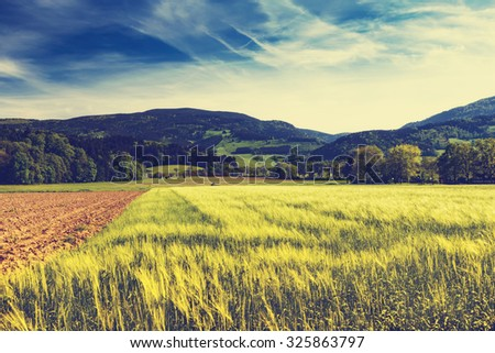 Summer mountain valley with crops growing in fields fields. Germany, Black Forest. Scenic agricultural landscape.  #325863797