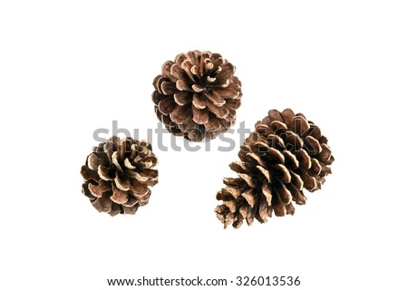 set of various pine cone trees isolated on white background Royalty-Free Stock Photo #326013536