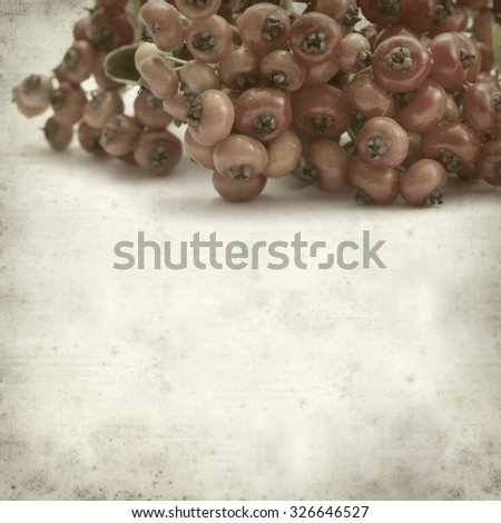 textured old paper background with Pyracantha berries #326646527