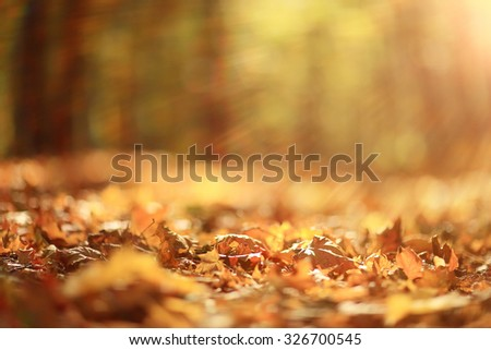 background autumn leaves in the park, nature