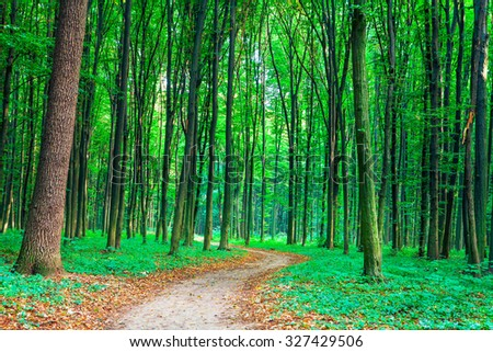 beautiful green forest #327429506