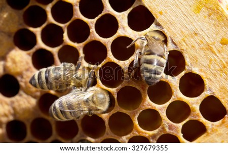 Bees on honeycomb in hive #327679355