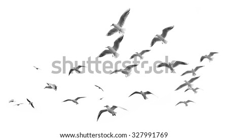 flying seagulls Royalty-Free Stock Photo #327991769