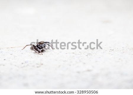 on the concrete floor there is a Jumping spider #328950506