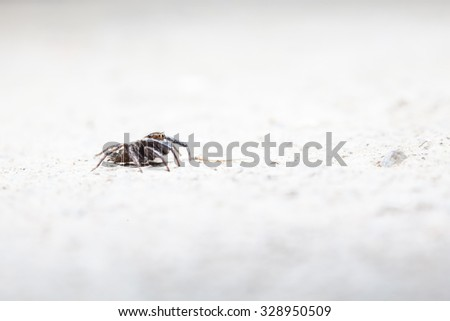 on the concrete floor there is a Jumping spider #328950509