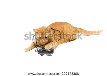 a yellow cat playing with a computer mouse #329146808