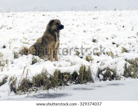 Homeless dog sitting on the shore of the lake . #329374037