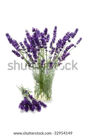 Plucked lavender in glass vase over white background #32954149