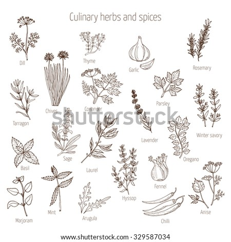 Hand drawn set of culinary herbs and spices. Vector illustration. #329587034