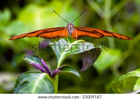 Butterfly sitting on a flower in spring time #33009187