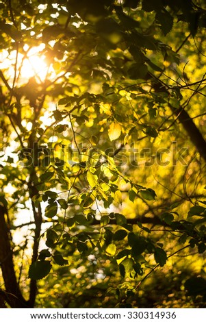 Nature background Photo sheet at sunset close up in warm colours macro bokeh Close up Leaf Backlit Silhouette Sun rays light between branches Empty space for inscription or other objects  #330314936