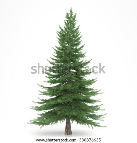 Fir tree isolated #330876635