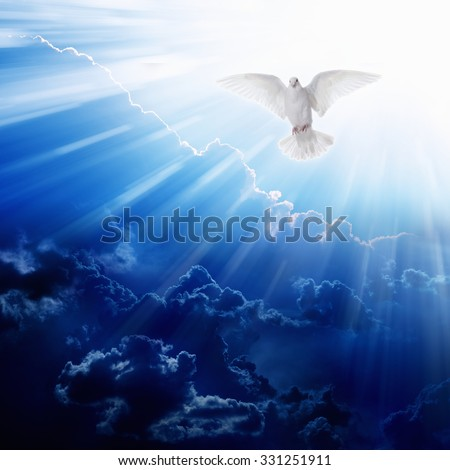 Holy spirit bird flies in blue sky, bright light shines from heaven, flying white dove Royalty-Free Stock Photo #331251911