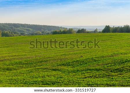 sedge, summer landscape natural background. . Shallow DOF, focus on sedge #331519727