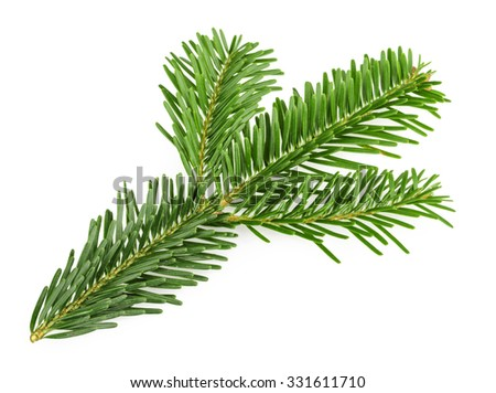 Fir tree branch isolated on white #331611710