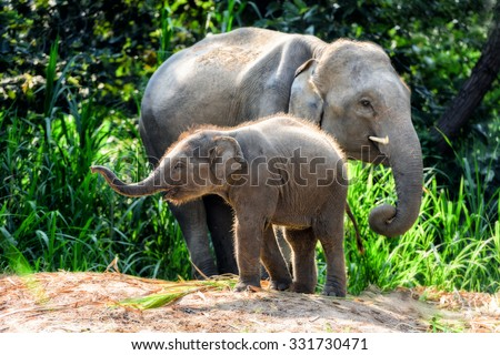Mother elephant with baby Royalty-Free Stock Photo #331730471