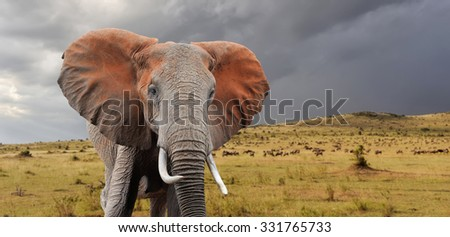 Elephant in National park of Kenya, Africa #331765733