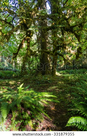 tree in Olympic national park #331879355