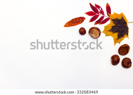 Koshtan and maple leaves on a white background #332083469