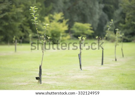 Newly planted trees in a row #332124959