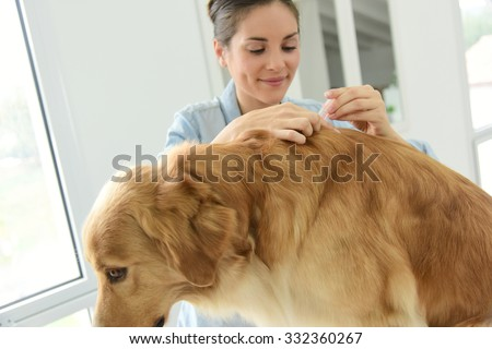 Woman applying tick and flea prevention treatment to her dog