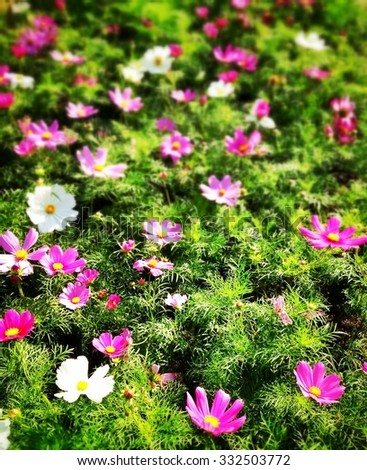 Flowers background #332503772