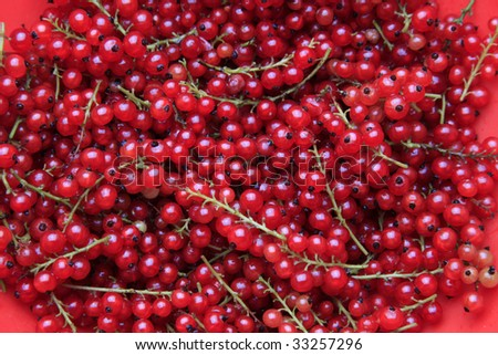 A lot of branches of the red currant #33257296