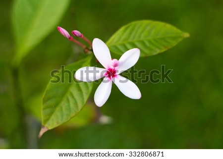 The flower #332806871