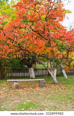 Old wooden bench in autumnal rural landscape #332899982
