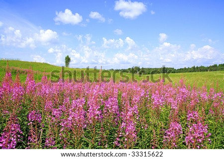 lilac flowers on field #33315622