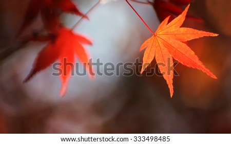 Autumnal maple leaves in blurred background, red foliage, sunlight , Soft & Dreamy Effect, Low Clarity #333498485