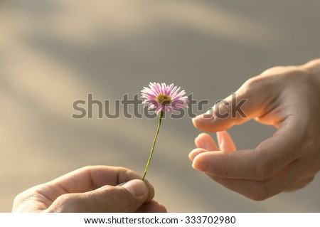 Hand gives a wild flower with love. romance, feelings Royalty-Free Stock Photo #333702980