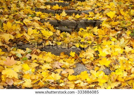 autumn leaves on stairs #333886085