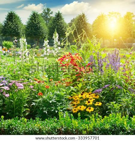 Multicolored flowerbed in park. Sunrise. #333957701