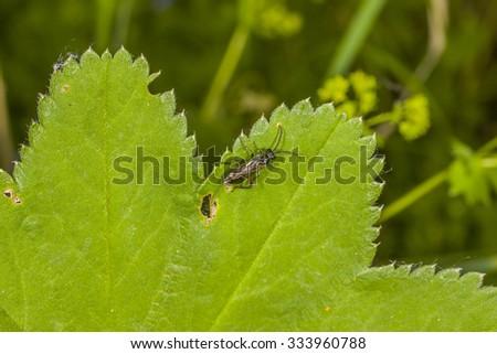 Ichneumonidae on tne plant #333960788