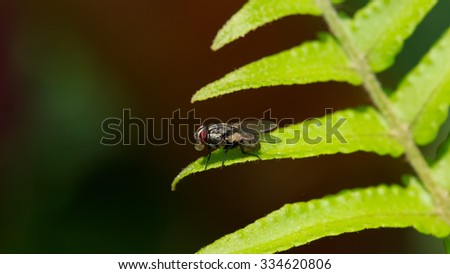 fly on fern leaf #334620806