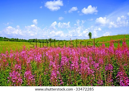 lilac flowers on field #33472285