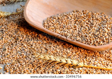 wheat seeds #33496756