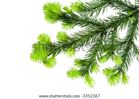 Branch of Fir isolated on white useful for prints decorations #3352367