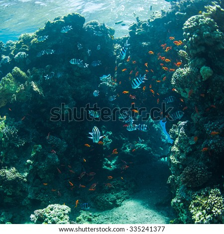 coral and fish in the sea at ten meters #335241377