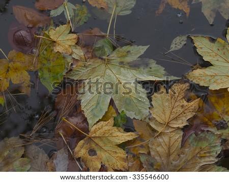 Fallen leaves in water #335546600