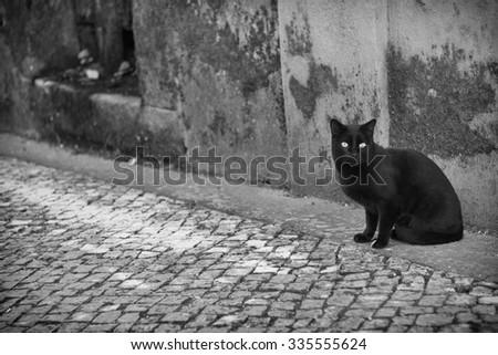 Black cat #335555624
