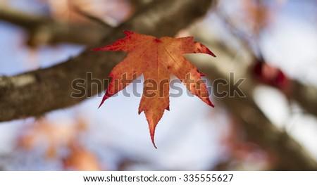Leaves #335555627