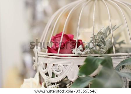 Rose #335555648