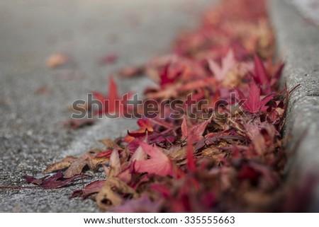 Autumn leaves #335555663