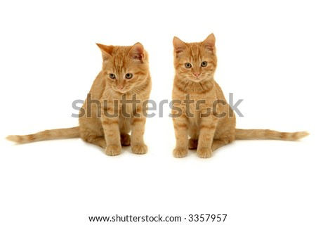 Two sweet kittens is sitting side by side on white background. #3357957