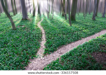 Bifurcation of a path in forrest Royalty-Free Stock Photo #336157508