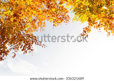 Beautiful and bright autumnal trees in Airdrie, Scotland #336321689